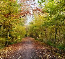 Pathway through Autumn Sunlit Woodland Trees by Natalie Kinnear