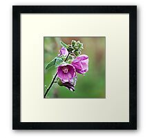 Pink flower in winter Framed Print