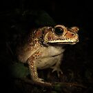 Toad from Bali by jimmy hoffman