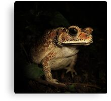 Toad from Bali Canvas Print