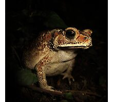 Toad from Bali Photographic Print