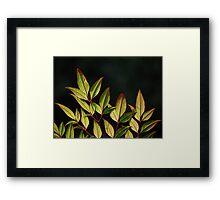 Red Stem Greenery Framed Print