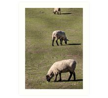 Three Sheep Art Print