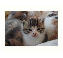a pile of kittens Art Print