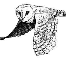 Barn Owl by shiro
