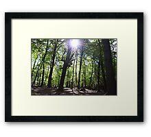 Shine a light on me Framed Print