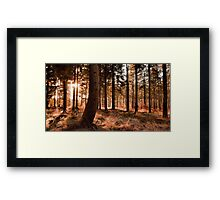 Cold Day in the Sun Framed Print