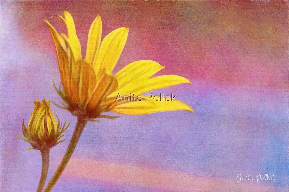 Painted Swamp Sunflower and Bud Along the Fence by Anita Pollak