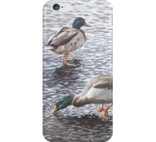 two mallard ducks standing in water iPhone Case/Skin