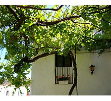 Under The Vines Photographic Print