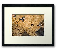 Low flying pigeons Framed Print