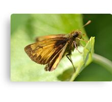 Peck's Skipper Canvas Print