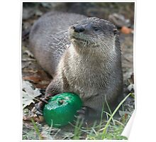 Otter has a green toy Poster