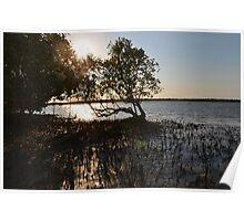 Mangrove sunset Poster