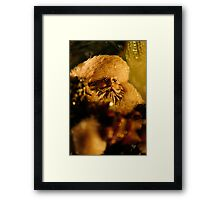 Good St. Nick Framed Print