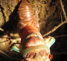 Cicada Hatching 2 by Vanessa Barklay