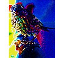 Neon Bird Photographic Print