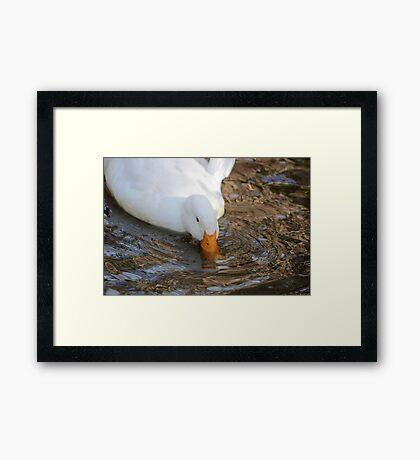 Pilgrim Goose Framed Print