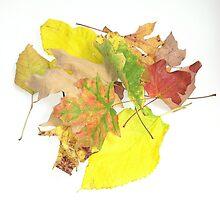 leaves by Hotlilmamax6