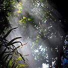 Light streams through the window of the Conservatory by Elana Bailey