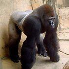 Silverback Gorilla by A4wiseowl