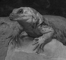 Chillaxin' Chuckwalla by A4wiseowl