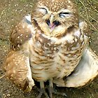 Laughing Owl by A4wiseowl