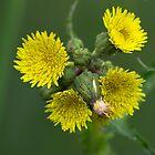 budding & flowering by Franc Wiedenhoff