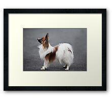 a small fluffy dog the side Framed Print