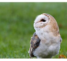 barn-owl Photographic Print