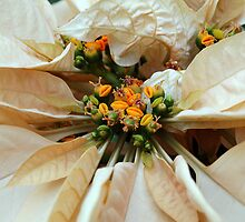 Beauty for the Holidays by Ralph Angelillo