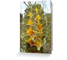 Cabbage Gloriana: Fitzgerald River National Park, Western Australia Greeting Card