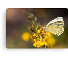 Flutterby Canvas Print