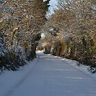 Snowy lane by DES PALMER