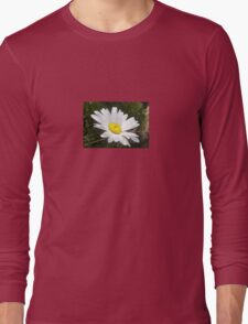 Close Up of a Margarite Daisy Flower Long Sleeve T-Shirt
