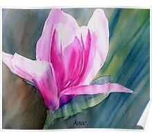 Asian Magnolia bloom Poster