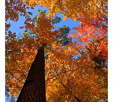 Fall Colors, Hartwick Pines State Park, Michigan, USA Photographic Print