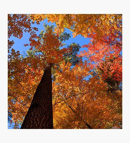 Fall Colors, Hartwick Pines State Park, Michigan, USA Photographic Print