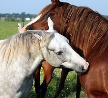 Horse Snuggle by Johnny Furlotte