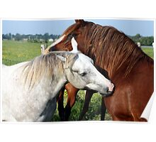 Horse Snuggle Poster