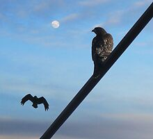 Hawk and the Crow by David Denny