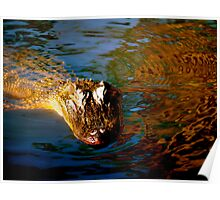 Alligator in the Louisiana swamp Poster