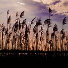 Dusk by Tracey Phillips