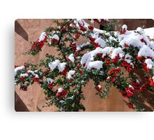 Snow-tipped berries Canvas Print