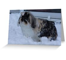 Bunny in the snow Greeting Card