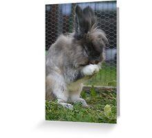 Cute bunny wash Greeting Card