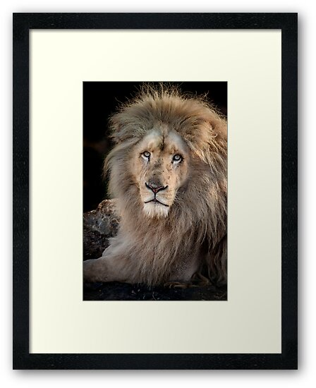King Of The Jungle by Patricia Jacobs DPAGB LRPS BPE4