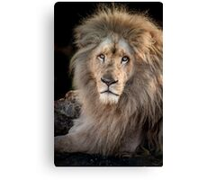 King Of The Jungle Canvas Print