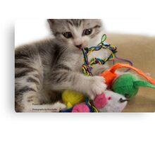 Rescue kitten - Pound cats Canvas Print