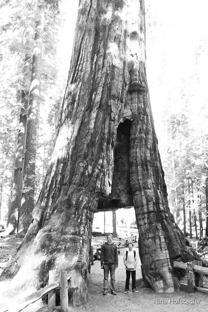 Walkthrough Redwood by Nina Hofstadler